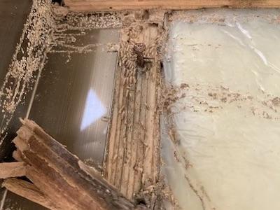 雨漏り白蟻被害